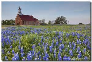 Church and bluebonnets
